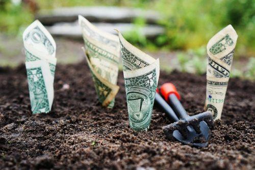 Planting money
